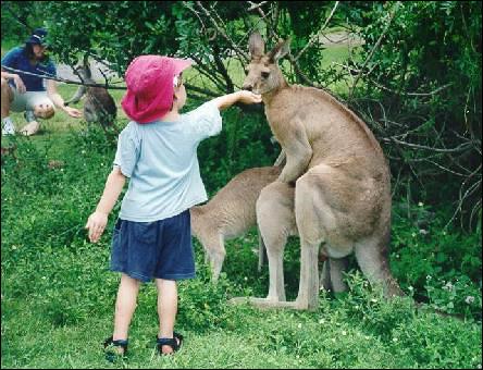 Barn matar knullande känguru