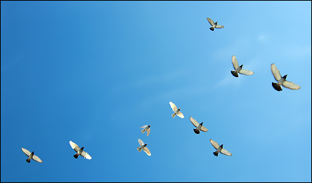 Flygande fåglar i himlen